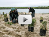 Volunteers celebrate the first I Love My Park Day on Taylor's Island planting beach grass
