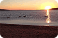 Thumbnail of swans at sunrise on causeway to Taylor's Island