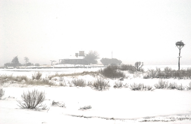 photograph of Taylor's Island in Snow